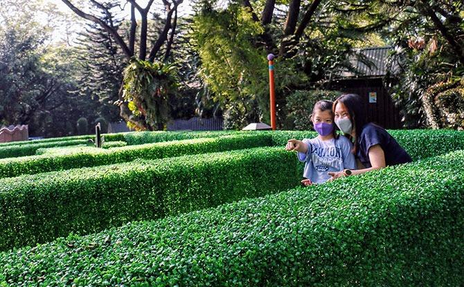 Jubilee Maze at Jurong Bird Park
