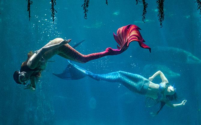 Mermaid at River Safari Tokidoki exhibition