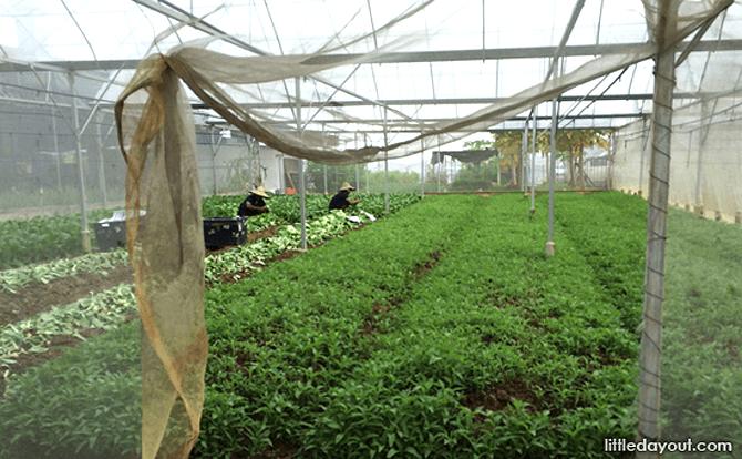 Weekend Farm - Kok Fah Technology Farm
