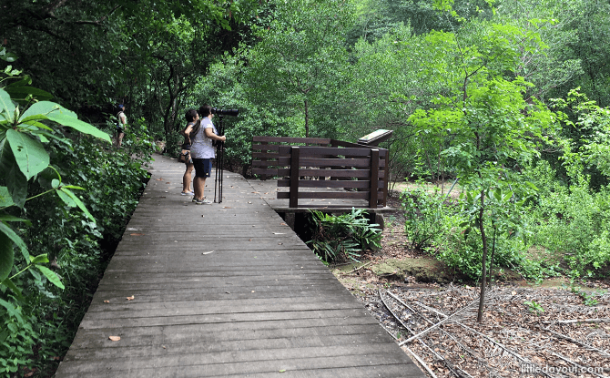 Mangrove Boardwalk at Pasir Ris Park