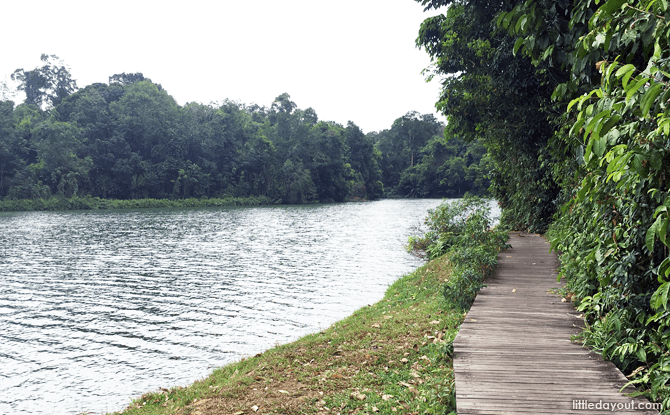 Boardwalk at Lower Peirce Reservoir - Walking Trail in Singapore