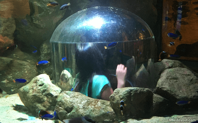 Secret Cave Tank