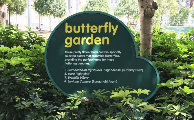 Butterfly Garden, City Square Mall