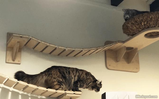 Cats at Meomi Cat Cafe