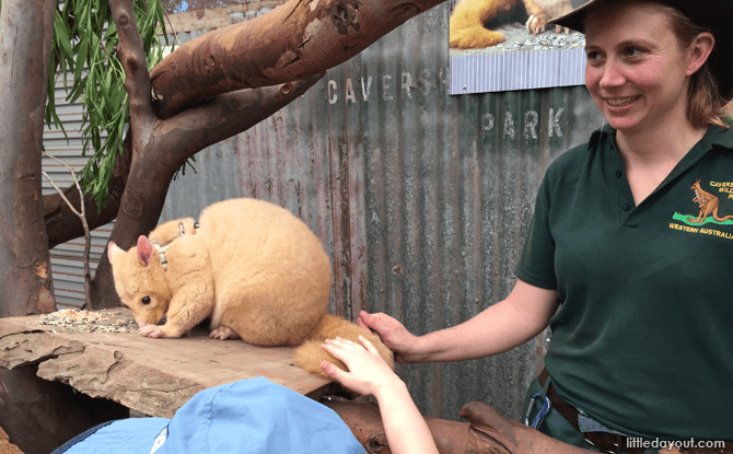 Meet animals at Caversham Wildlife Park