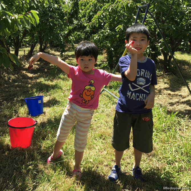 Pick Your Own Fruit at an Orchard - Family Friendly Things To Do in Sydney