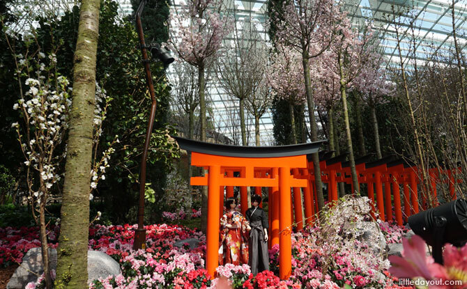 Sakura Matsuri: Cherry Blossoms at Gardens by the Bay 2018