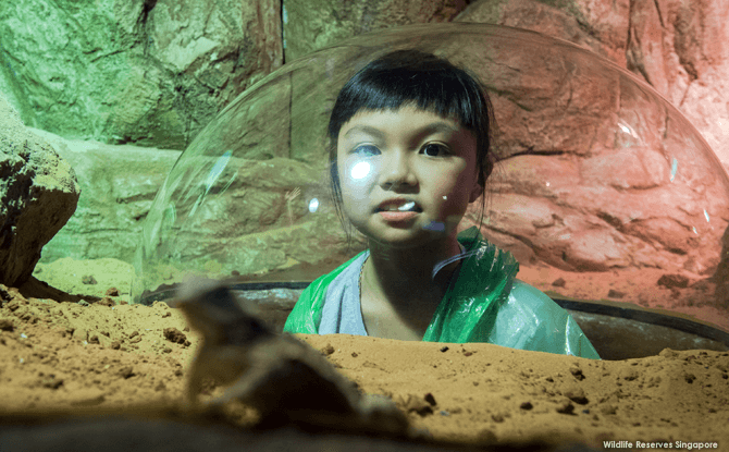 Kid-friendly Things to Do at RepTopia, Singapore Zoo