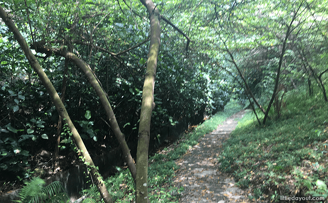 Earth Trail beneath the Forest Walk