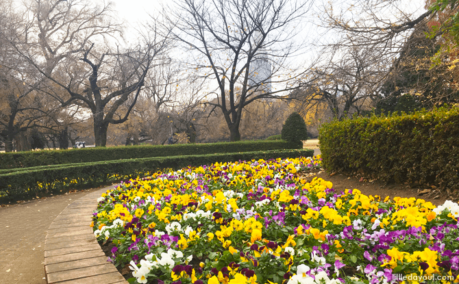 Flower bed at the English Landscape Garden