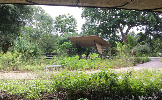 Ethnobotany Garden, Singapore Botanic Gardens