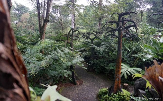 Walking Through the Evolution Garden, Singapore Botanic Gardens
