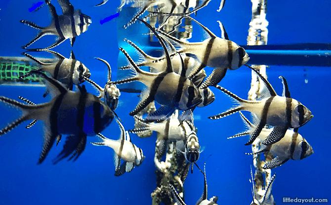 Sea Creatures at Aquaria KLCC, Aquarium at Kuala Lumpur Convention Centre