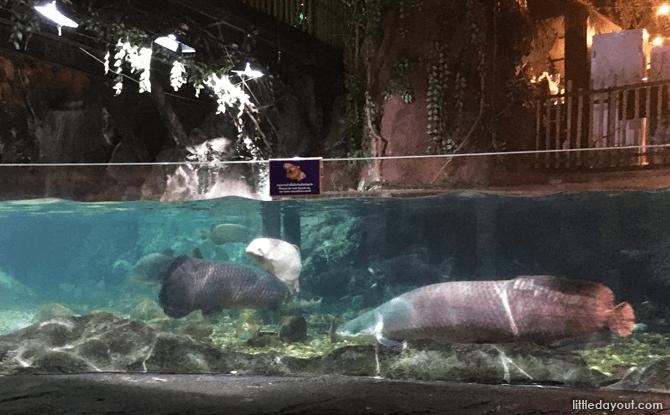 Tropical Rainforest, SEA LIFE Bangkok Aquarium
