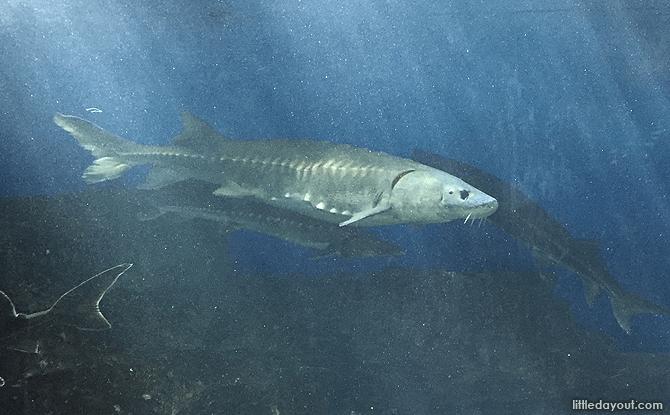Otaru Aquarium Marine Life