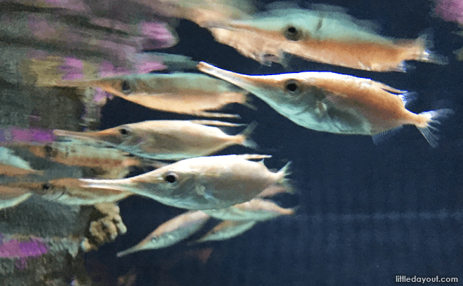 Fish on display at AquariaKLCC
