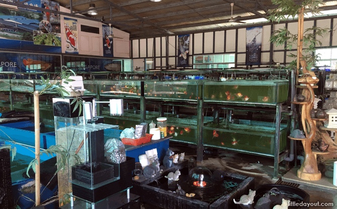 Fish tank area at Mainland Tropical Fish Farm