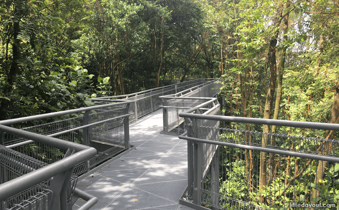 Forest Walk, part of Southern Ridges Walk