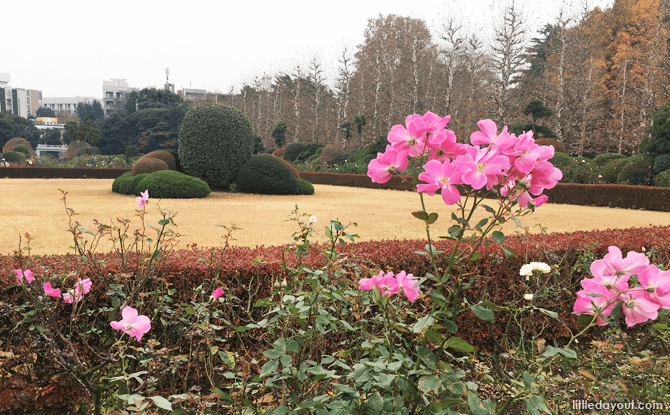 Roses at the French Formal Garden