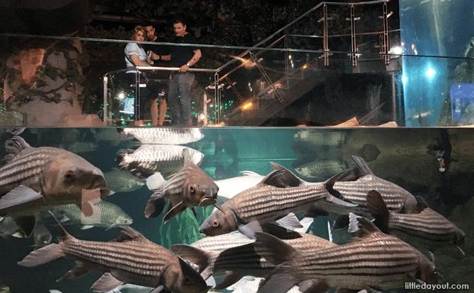 Freshwater exhibit at KLCC Aquarium