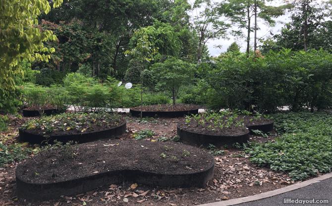The Healing Garden at Singapore Botanic Gardens