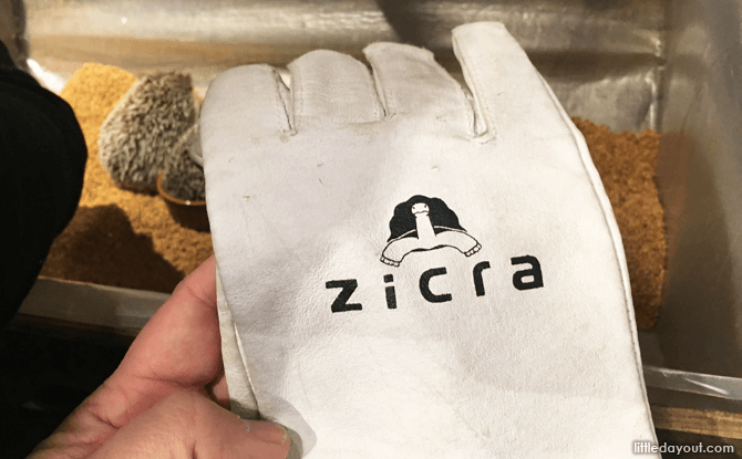 Gloves for picking up the hedgehogs