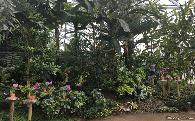 Tropical and sub-tropical plants are found in The Greenhouse