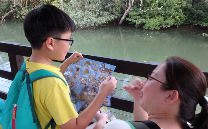Looking out for marine life along the shore with the Northern and Southern Singapore Shores Guidesheets