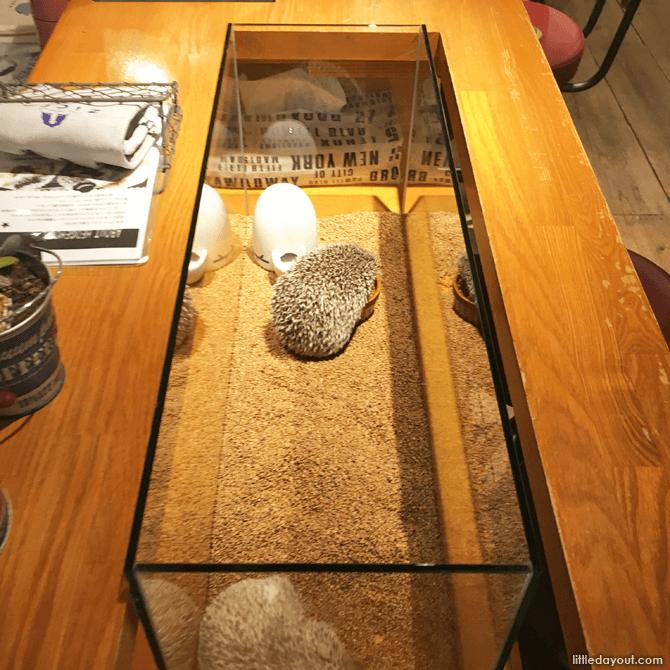 Hedgehogs at Hedgehog Cafe, Tokyo