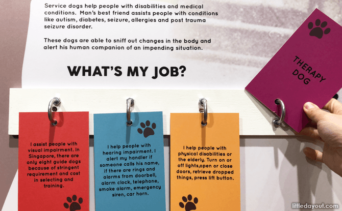 Learn about the jobs that dogs do.