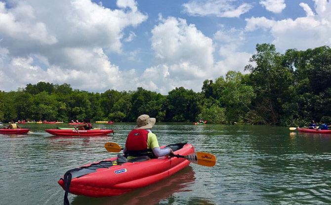 Mangrove Kayaking - Pesta Ubin 2018