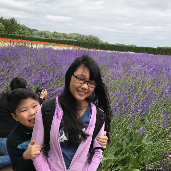 Farm Tomita, Lavender Fields