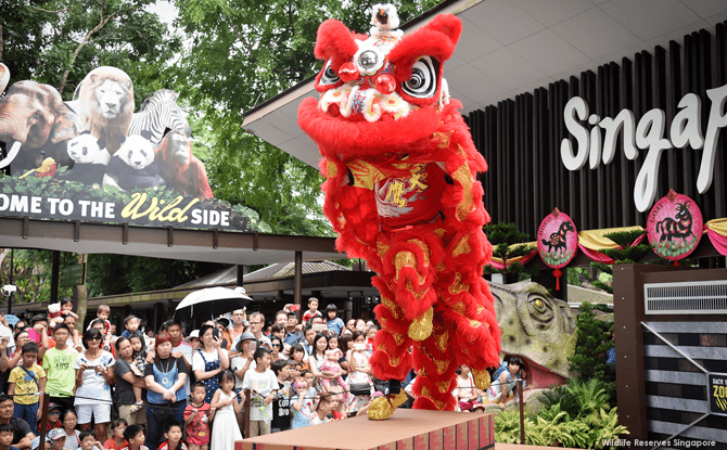 Lion dance at Singapore Zoo - Lunar New Year 2018
