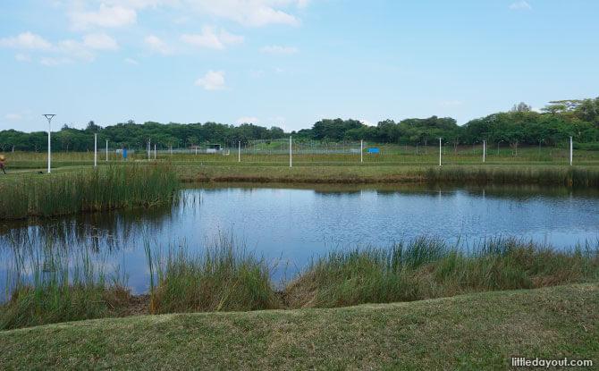 Polishing Pond at Lorong Halus Wetland