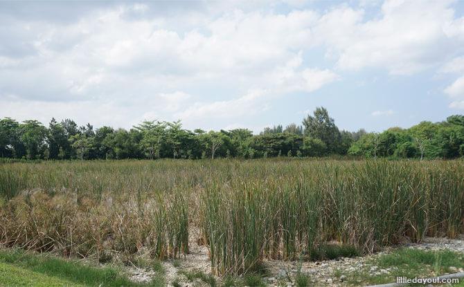 Reed beds at Lorong Halus