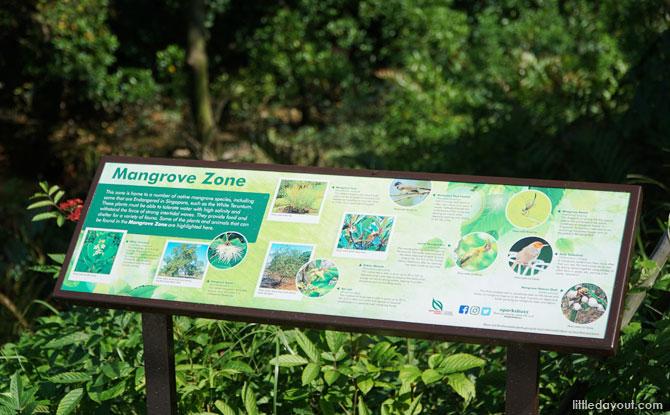 Mangrove Zone, Marsiling Park