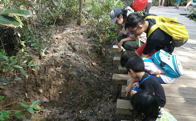 No Wildlife in Singapore? Wildlife Volunteer Groups In Singapore Will Prove You Dead Wrong!