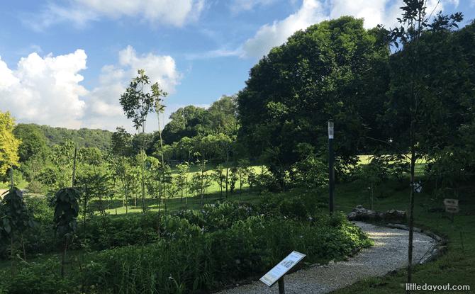 Native Garden, HortPark