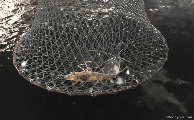 Prawn in the net