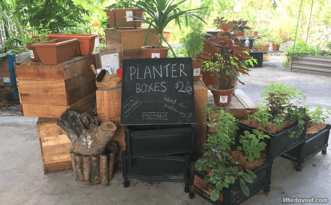 NONG by Edible Garden City