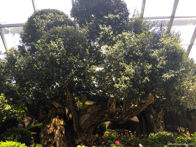 Olive Grove at Gardens by the Bay