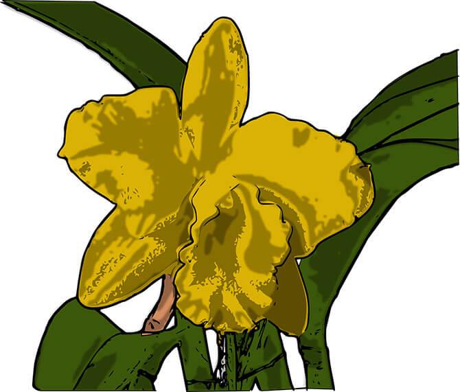 e-orchid