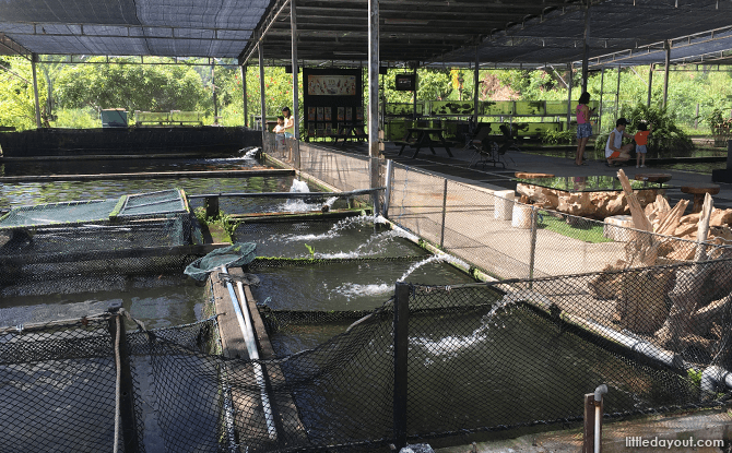 Mainland Tropical Fish Farm's Outdoor Ponds
