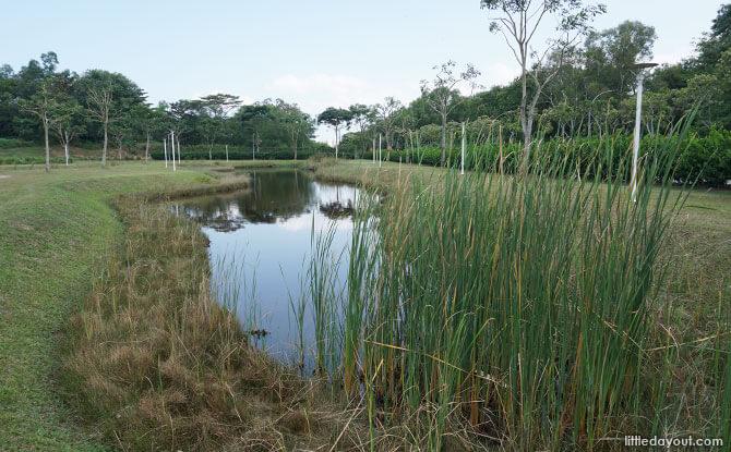 Ponds at Lorong Halus Wetland