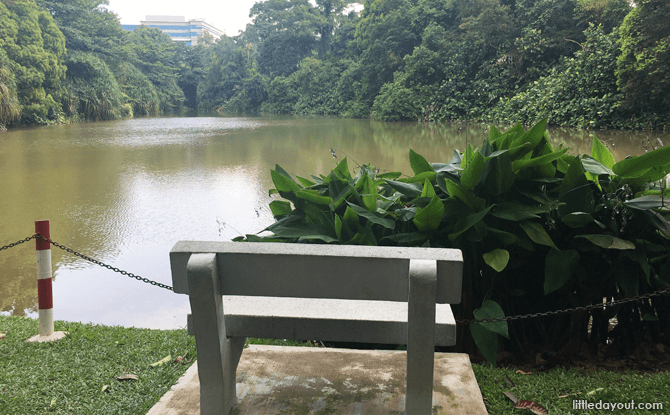 Kent Ridge Park Pond