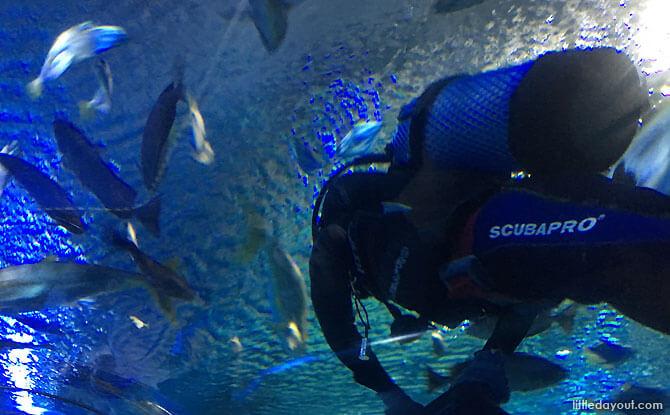 Living Ocean at KLCC Aquarium