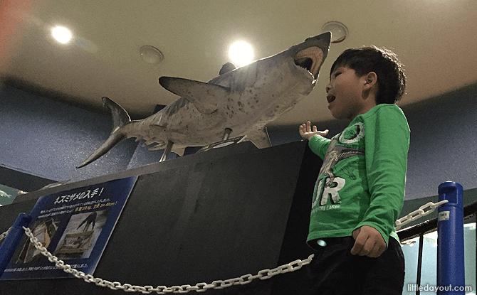 Shark exhibit at Otaru Aquarium