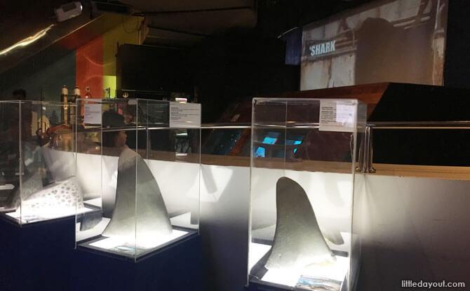 Sharks fin exhibit, Aquaria KLCC