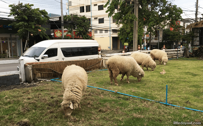 Sheep at Alpaca View