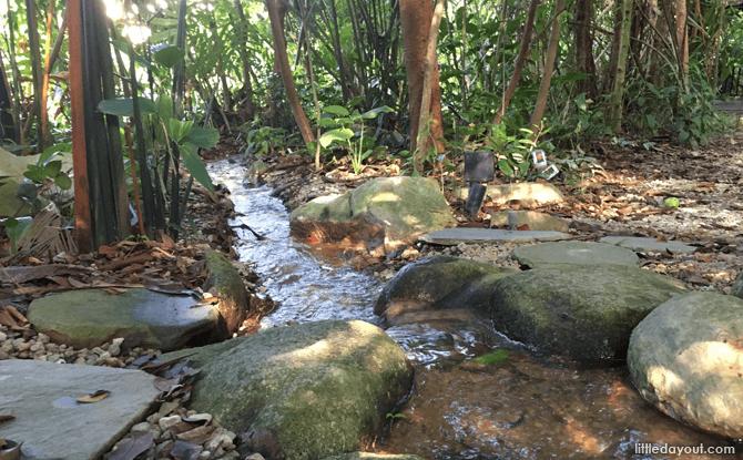 Mangrove Swamp area